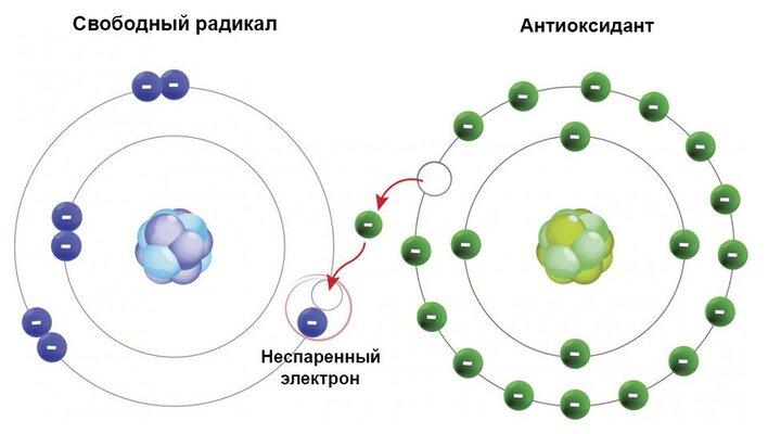 нейтрализация свободных радикалов с помощью антиоксидантов